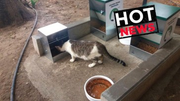 paraiso_gatuno_hot_news