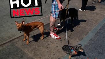 perros-tatoos