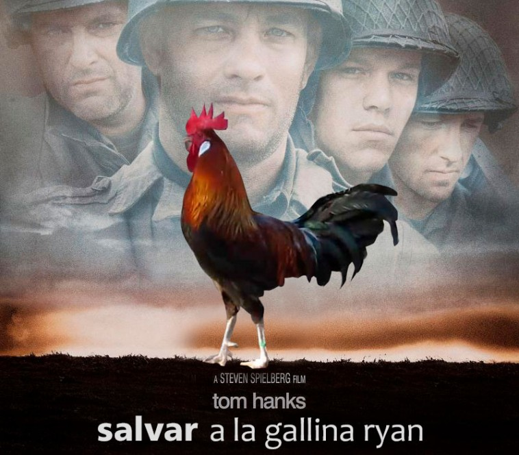salvar_gallina_ryan_post