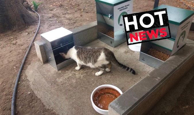 paraiso_gatuno_hot_news
