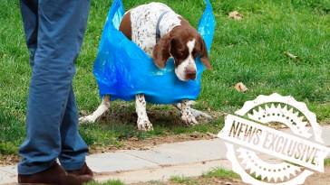 bolsas-excrementos-perros