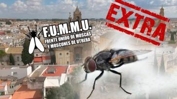 moscas-elecciones